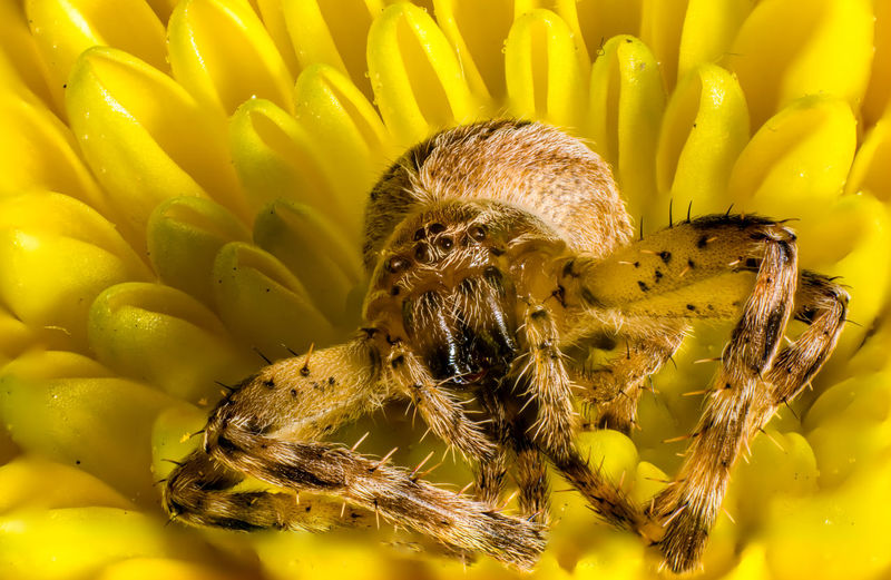 Animal Themes Beauty In Nature Close-up Macro Macro Photography Nature No People Spider