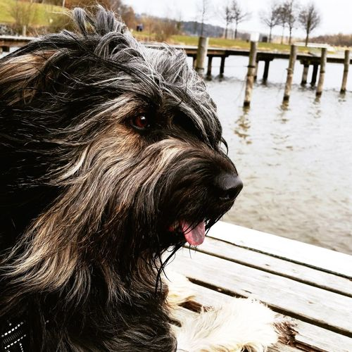 Bentjesgosaugustin Gos D'atura I Love My Dog Lakeside Dog Walking Mydog Ilovemydog Dog