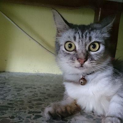 Instacat Cat Pets Meowchat meow ☆☆☆ ?????????