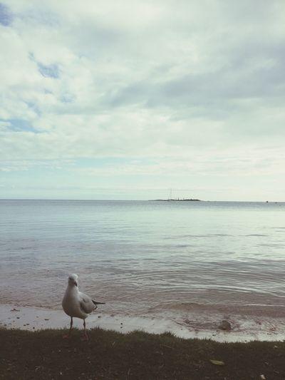 Photography Sea Island Ocean