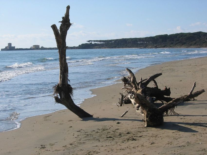 A dry tree on the sand of a beach of Torre Astura in Italy. Dry Tree Tower In Distance Italy🇮🇹 Latium Torre Astura Wintertime Travel Destinations Waves Forest In Distance Dry Trunk Part Of The Trunk On The Sand Wood Sand Beach Sea Water Outdoors No People Nature Calm Seascape Tranquil Scene Scenics Tranquility