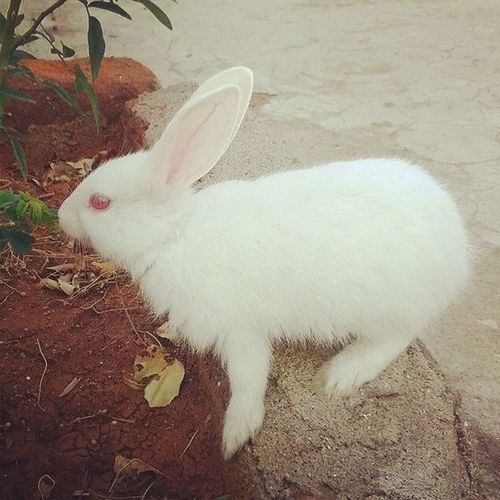 My sweet pet