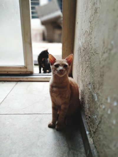 Kitty Home Cats Cats Of EyeEm Pets Portrait Cute Looking At Camera Animal Themes Close-up Confined Space Feline Door Cat Residential Structure
