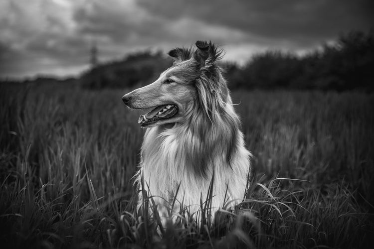 Lulu / Contrasty Monochrome 😌 Dog Domestic Animals Animal Animal Themes Grass Nature Selective Focus Outdoors Animals In The Wild Portrait Animalportrait Blackandwhite Monochrome Contrast EyeEm Best Shots EyeEm Nature Lover EyeEm Selects EyeEm Gallery Cologne Köln NRW Tamron Nikon+ Photography