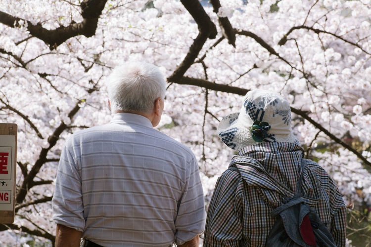 Rear View Of Senior Man And Woman Against Cherry Blossoms