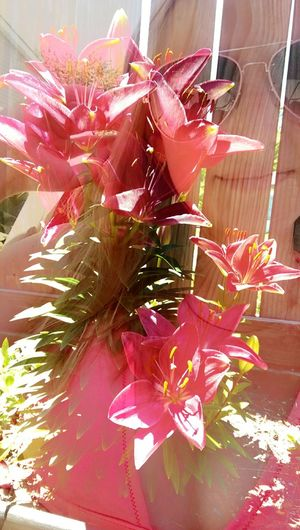 Merge Two Photo That's Me Relaxing Pretty Nature Girl Outside Plants Leaves Love The Great Outdoors With Adobe Pink Swimsuit