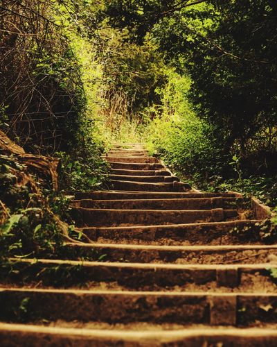 Tree Steps