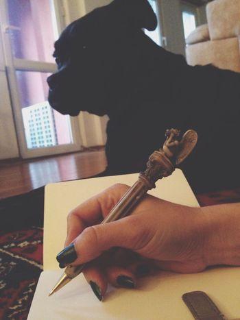 Boxer Dog Enjoying Life
