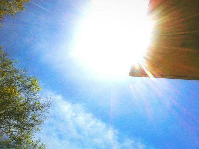 My View while I lay out to Sunbathe Sun Horse Tails Clouds Oak Tree Spring but it feels like Summer ☀ I look Sunburnt