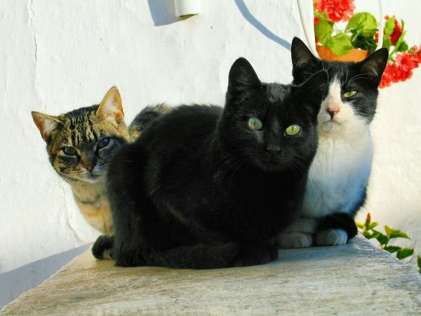 Waiting for supper. Cats Cats On A Wall Cats Eyes Cat Watching Cat Lovers Cat Photography Cat Eyes Spanish Cats Three Cats Andalucia Rural Monterroso