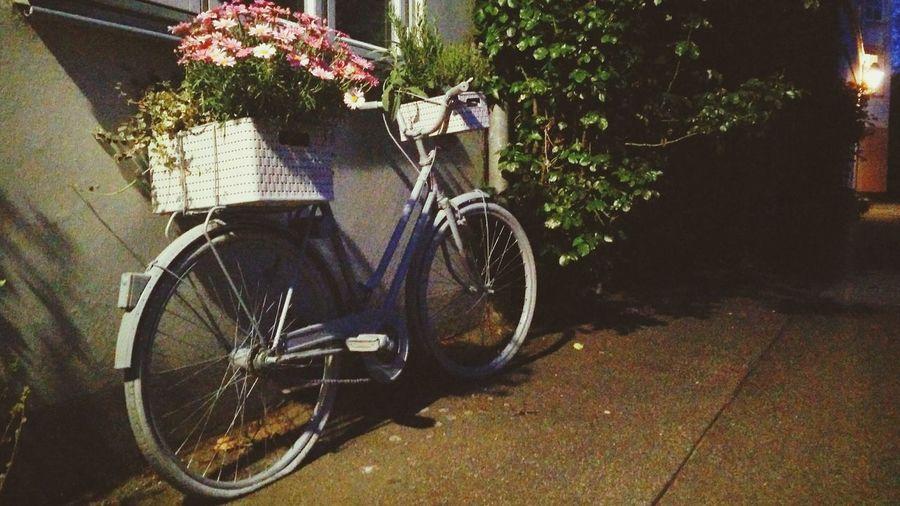 Das Fahrrad mit den Rosa Blumenkorb Flowerpower