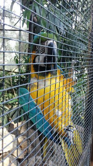 Freedom Freemind  Parrot Leukada, Greece EyeEm Selects Bird Cage Protection Metal