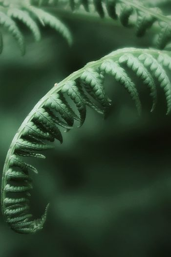 Green fern in the forest