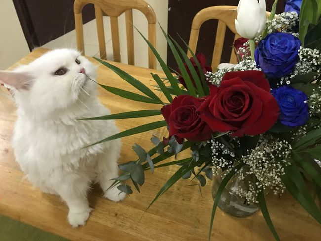 my cat and flowers Flower Indoors  Pets White Color Vase One Animal Table Animal Themes Bouquet Rose - Flower Domestic Animals Bird Home Interior No People Day Flower Head Close-up Mammal