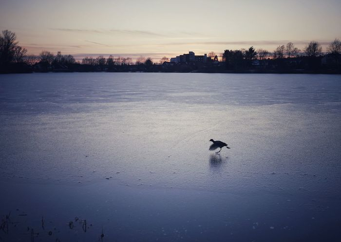 Dancing on ice - 13.02.2018 - MAinLoveWithFreedom Little Bird Dancing On Ice Ice Ice Skating Figure Skating Figure Skater Animal Animals Animal Photography Nature Naturelovers Nature Photography Nature_collection Nature On Your Doorstep Blue Sky Beauty In Nature Beautiful Nature Having Fun Bird Water Swimming Sunset Winter Lake Cold Temperature Silhouette Reflection Water Bird