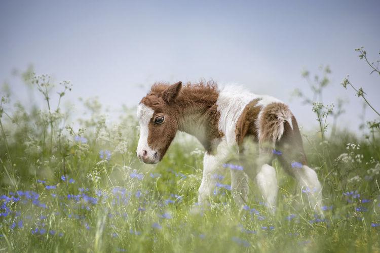 Rear view of foal standing amidst plants on field