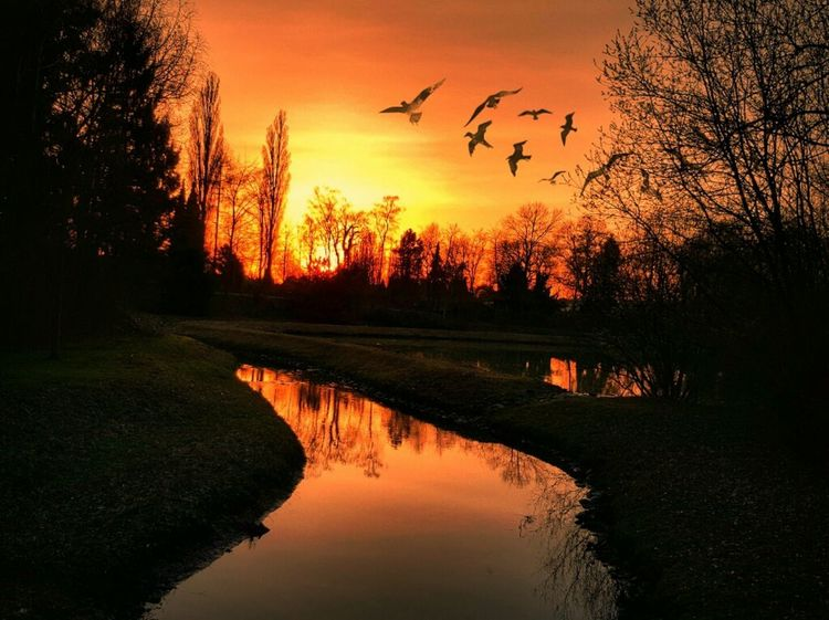 Enjoy the silence.... 😍 Werne A.d. Lippe Bird Sunset Reflection Flying Animal Wildlife Tree Silhouette Beauty In Nature Scenics The Great Outdoors - 2017 EyeEm Awards EyeEmNewHere First Eyeem Photo EyeEm Gallery Nature On Your Doorstep The Photojournalist - 2017 EyeEm Awards Rural Scene Tranquility Nature Landscape Beauty In Nature Capture The Moment Sunlight EyeEm Best Shots BYOPaper! Live For The Story Paint The Town Yellow Lost In The Landscape Perspectives On Nature HUAWEI Photo Award: After Dark #urbanana: The Urban Playground