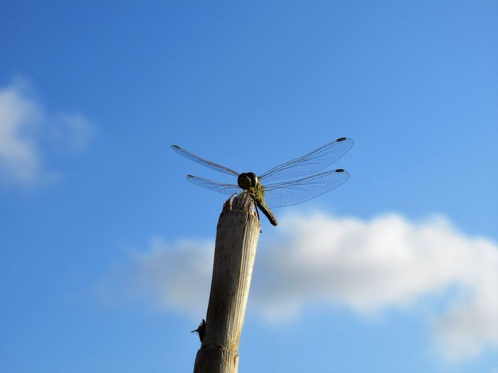 Low angle view of dragonfly on wooden post against sky