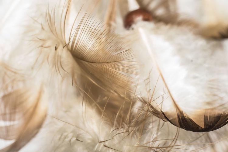 Fedeeleicht Closeup Feder Feather  Warm Lightweight Nature Beauty In Nature