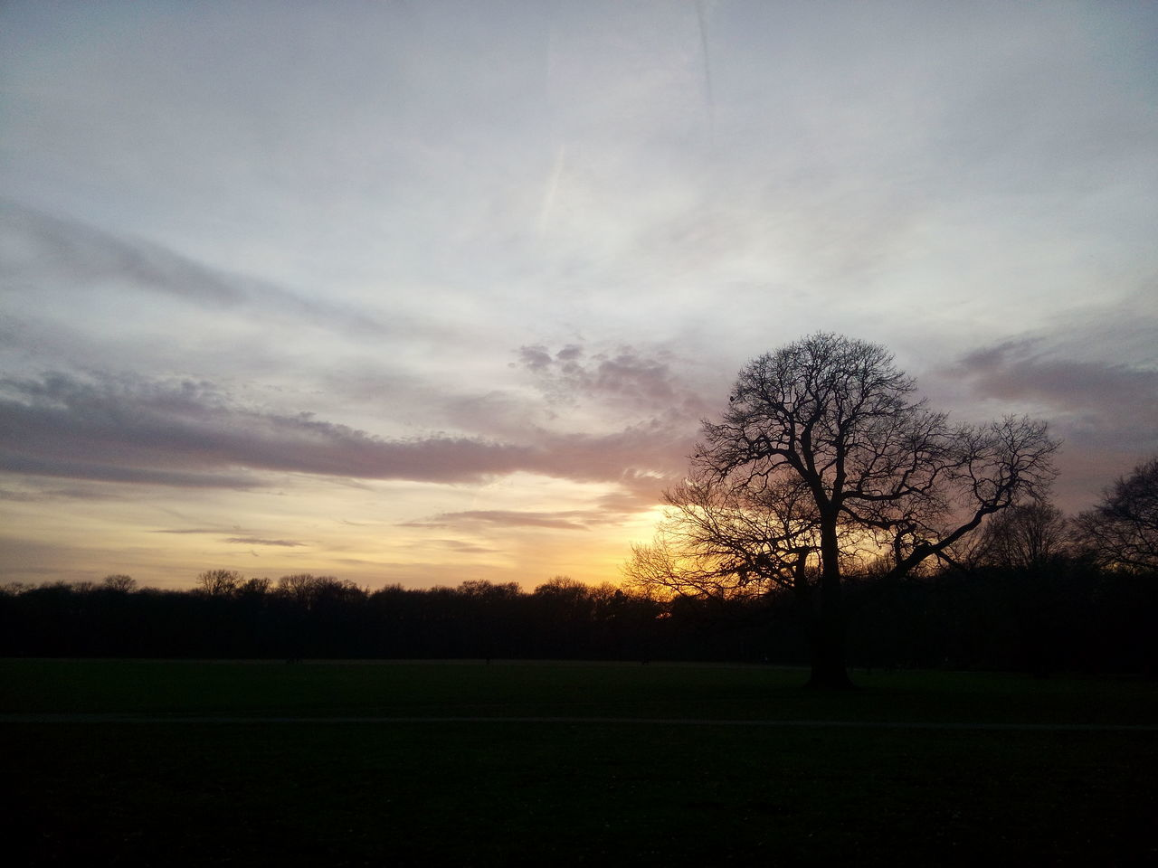 tree, beauty in nature, tranquility, nature, tranquil scene, landscape, scenics, field, majestic, sunset, sky, silhouette, bare tree, no people, grass, outdoors, day
