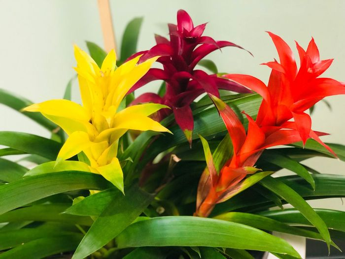 Colorful Plant Flower Flowering Plant Plant Part Leaf Growth Beauty In Nature Freshness Vulnerability  Close-up Fragility Petal Yellow Flower Head Nature Inflorescence Green Color No People Day Red