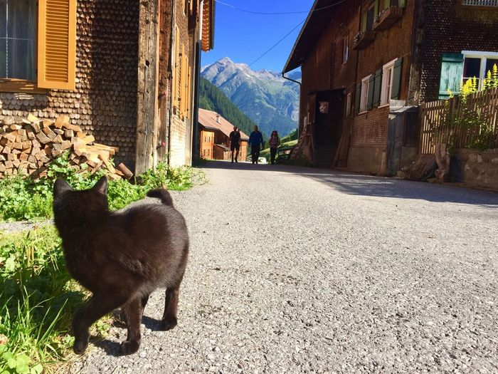 Starting our Tour in Kaisers Austria Alps Mountain Mountain Range Hiking Hiking Adventures Cat Wooden Cabin