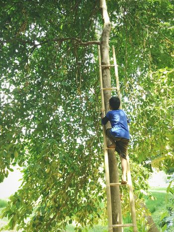 Climb Up! Staircase Climbing Trees Great Atmosphere Childhood Strongchild Aloneinthejungle Young Wild And Free(; Spiritday Bali Humaninterest Siluette Youngboy WildBoy