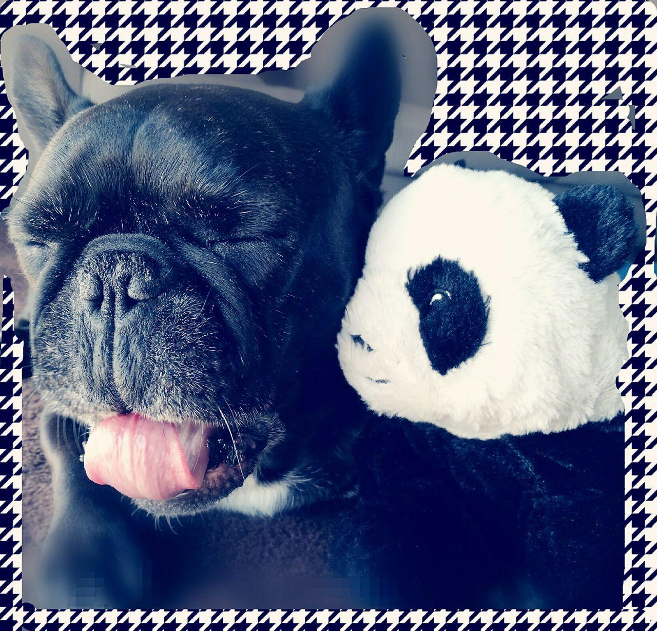 domestic animals, mammal, dog, pets, indoors, animal themes, no people, close-up, day
