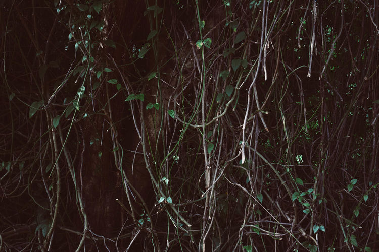 Backgrounds Bare Tree Beauty In Nature Branch Close-up Forest Nature Night No People Outdoors Scenics Tranquil Scene Tranquility Tree Trunk