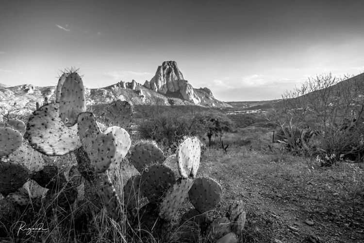 Peña y nopales en Bernal Sky Scenics - Nature Landscape Mountain Environment Beauty In Nature Plant Tranquility Tranquil Scene No People Nature Cloud - Sky Land Mountain Range Solid Rock Rock - Object Day Wilderness Travel Destinations Outdoors Climate Arid Climate Mountain Peak