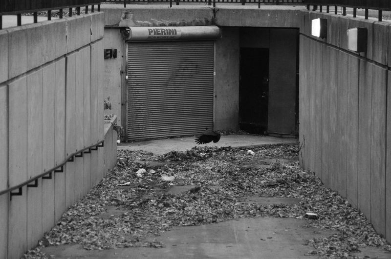 2014 Black And White Blackandwhite Chicago Concrete Empty Corner Flying Raven Leaves No People Outdoors Raven Shutter Winter Lonely Loneliness Trash