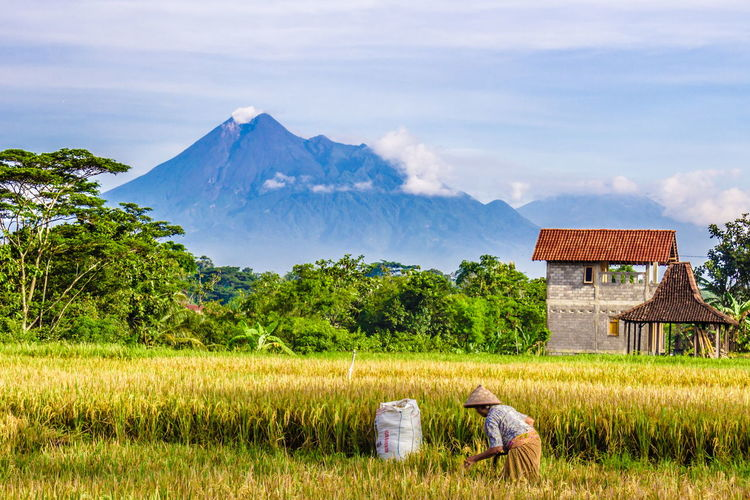 farmer Wonderful Indonesia Pesonaindonesia Worldcaptures Indonesia_photography Landscape Human Interest Mountain Oil Pump Farmer Agriculture Barn Irrigation Equipment Rural Scene Field Cereal Plant Sky Rice Paddy Rice - Cereal Plant Terraced Field