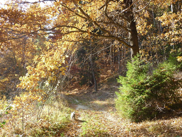 Fall Atumn Autumn Colors The Place Where The Fairys Play...