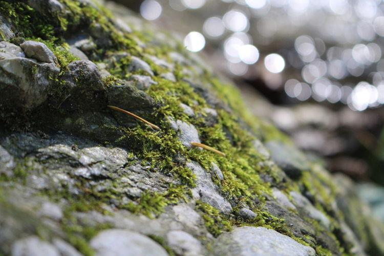 Close-up of lizard on rock