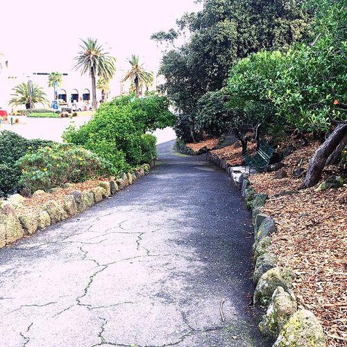 walĸιng along a paveмenт вeaυтιғιed вy greenery gιveѕ мe a ѕenѕe oғ reғreѕнneѕѕ Naтυre Aυѕтralιa тravel Holiday Greenery Novotel Vscocam