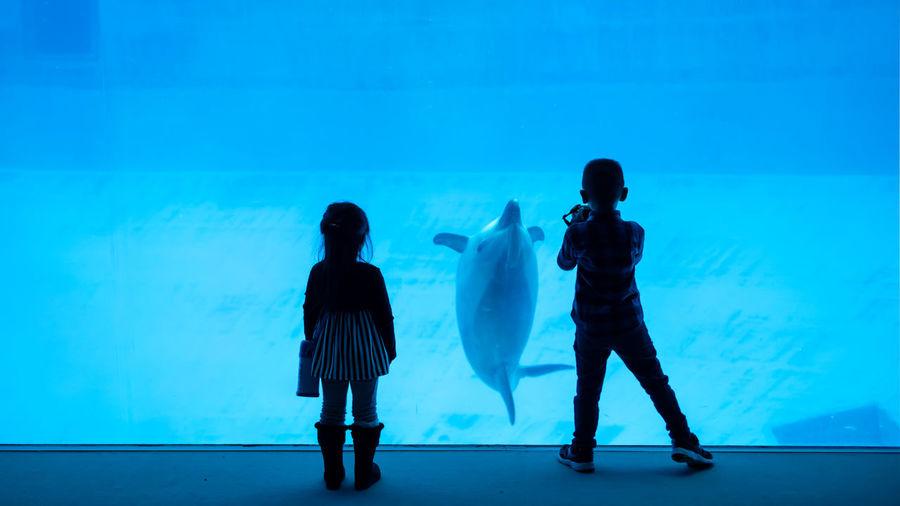 Rear view of friends standing at aquarium