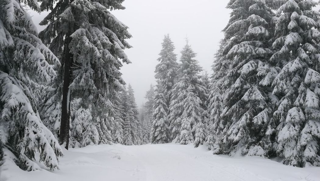 Snow Winter Cold Temperature Tree Pinaceae Pine Tree Forest Frozen No People Nature Outdoors Sky Snowing Day WoodLand Landscape Tree Area Polar Climate Beauty In Nature Mountain
