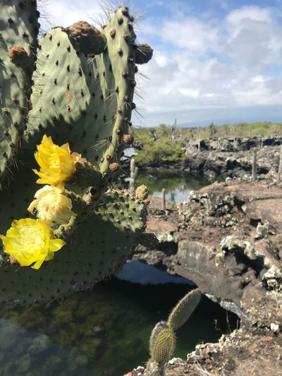 Life and death Galapagos Los Tuneles Cactus Nature Beauty In Nature Flower Prickly Pear Cactus Growth No People Outdoors Day Plant Fragility Close-up Uncultivated Animals In The Wild Sky Flower Head Freshness Animal Themes An Eye For Travel