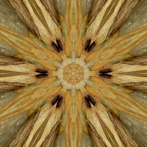 Edited image- Abstract Backgrounds Full Frame Concentric Close-up Symmetry Geomatric Shapes Beauty In Nature Editing Photos Kaleidoscope Kaleidoscopeartwork