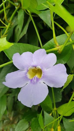 Orquídea, Orchid. Flower Plant Nature Petal Leaf Close-up Beauty In Nature