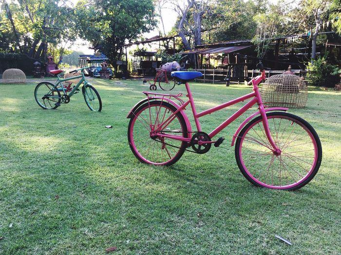 Bicycle Transportation Land Vehicle Plant Mode Of Transportation Stationary Nature