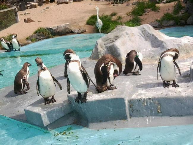 Köln Zoo Pinguine Aminals Lieblingstiere ♡