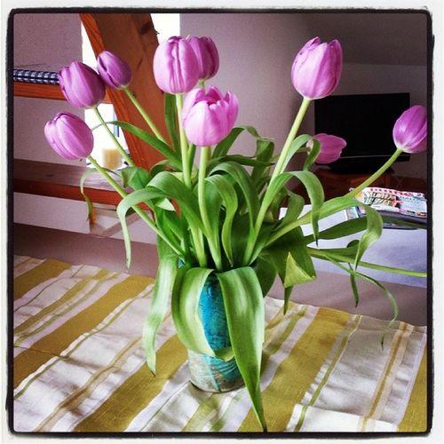 Foto der Woche Tulpen Tulip Fotomitmachaktion Fotoderwoche lila spring2014 april hiergradso