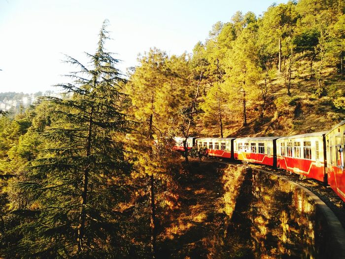 To Shimla! Tree Transportation Rail Transportation Public Transportation Day Outdoors No People Nature Sky Beauty In Nature Toy Train View From Scenics Travel Destinations