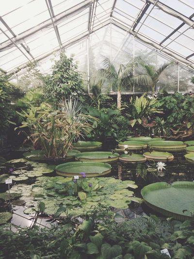 Botanical Gardens Nature Greenhouse Vscocam My Best Photo 2014