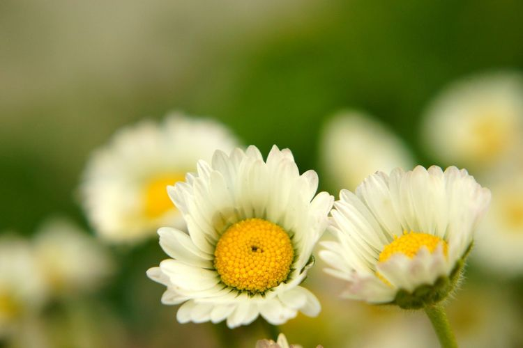 Flower Head Flower Closing Yellow Petal Uncultivated Springtime Close-up Plant Flowering Plant Passion Flower Dandelion Pistil Plant Life Rhododendron Blossom Daisy Day Lily Apple Blossom Single Flower Single Flower Coneflower Stamen Pollen Botany Hibiscus In Bloom Wildflower Dandelion Seed
