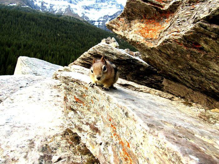 My first few days in banff and im already a squirrel whisperer😏 First Eyeem Photo