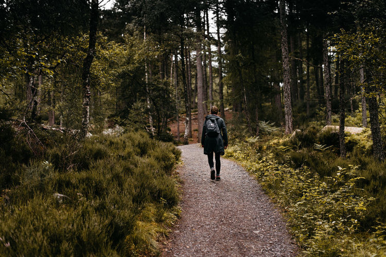 Rear View Of Hiker Walking On Pathway Amidst Trees In Forest