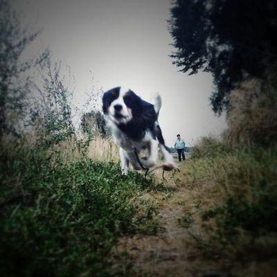 The running dog