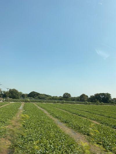 Field Plant